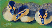 Birds Pastels Prints - Three Amigos Print by Tracy L Teeter