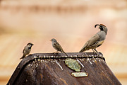 Ore Cart Prints - Three Birds on an Ore Cart Print by  Onyonet  Photo Studios