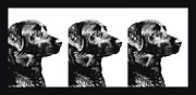 Labradors Prints - Three Black Labs in a Row Print by Jennie Marie Schell