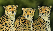 Cheetah Pastels Framed Prints - Three Cheetahs Framed Print by Sarah Dowson