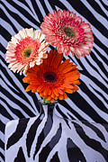 Garry Gay - Three Daises In Striped...