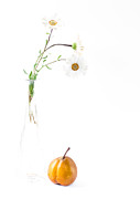 Fine Photography Art Photos - Three Daisies And A Pear by Constance Fein Harding