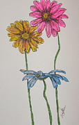 Daisies Drawings Prints - Three Daisies Print by Marcia Weller-Wenbert