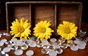 Glass Table Reflection Prints - Three Daisy Shadowbox Print by Kerri Mortenson