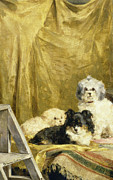 Table Cloth Painting Prints - Three Dogs Print by Charles van den Eycken