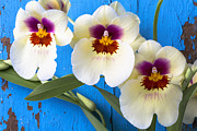 Exotic Metal Prints - Three Exotic Orchids Metal Print by Garry Gay