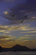 Camilla Fuchs - Three flying Pelican...