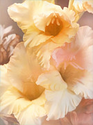 Gladiolas Digital Art Prints - Three Glads Print by Douglas MooreZart