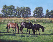 Martin Davey Prints - Three horses in field Print by Martin Davey