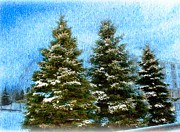 Fir Trees Digital Art Prints - Three In A Row Print by Judy Palkimas