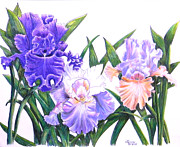 Lavender Drawings Originals - Three Irises by Laura Wilson
