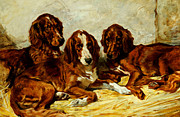 Puppies Painting Prints - Three Irish Red Setters Print by John Emms