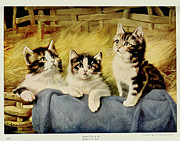 Moggy Posters - Three Kittens Poster by E Graham