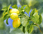 Lemons Posters - Three Lemons Poster by Sharon Freeman