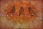 Photographic Art Art - Three Little Birds by Tom York