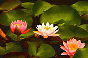 Three Lovely Gracious Waterlilies Print by Byron Varvarigos
