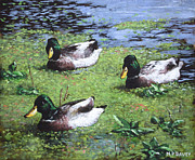 Mallard Ducks Paintings - Three Mallard Ducks In Pond by Martin Davey