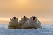 Winter Sleep Framed Prints - Three Noses Framed Print by Tim Grams
