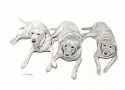 Retrievers Drawings - Three Of A Kind by Sarah Batalka