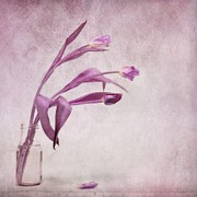 Flower Still Life Metal Prints - Three Of Us Metal Print by Priska Wettstein