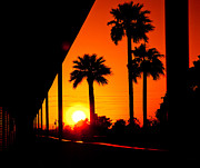 Digital Photo Art Posters - Three Palms In Sunset Poster by Bedros Awak