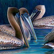 Coastal Birds Pastels Framed Prints - Three Pelicans Framed Print by Laura Griffith