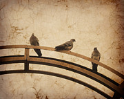 Textured Effect Prints - Three pigeons perched on a metallic arch. Print by Bernard Jaubert