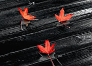 Rain Digital Art - Three Red Leaves after Rain by Ellen Cotton