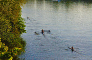 Rowing Crew Posters - Three Rowers along the Schuylkill Poster by Bill Cannon