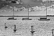 Jensen Prints - Three Sailboats Print by Patrick M Lynch
