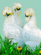 Farm Animals Digital Art Posters - Three Silky Ladies Poster by Jane Schnetlage