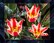 Stamen Mixed Media Framed Prints - Three Striped Tulips in an Abstract Garden Painting Framed Print by Omaste Witkowski