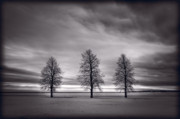 Black Originals - Three Trees by Steve Gadomski