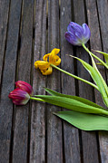 Surprise Prints - Three Tulips Print by Svetlana Sewell