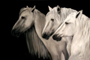 Three White Horses Print by Nancy Bradley