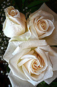 Condolences Posters - Three White Roses Poster by Sandi OReilly