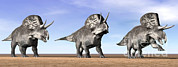 Three Dimensional Digital Art - Three Zuniceratops Standing by Elena Duvernay