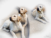 Labrador Photos - Threes Company by Peter Chilelli