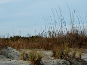 Helen Walker - Thriving Sea Oats