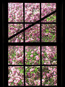 Cherry Tree Posters - Through an Old Window Poster by Olivier Le Queinec