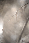 Linda Knorr Shafer - Through Mist And Smoke