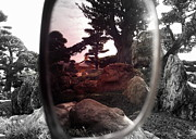 Shawna Gibson - Through rose colored lens