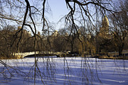 Wintry Photo Posters - Through The Branches 1 - Central Park - NYC Poster by Madeline Ellis