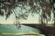 Beach Scene Photos - Through the Casuarina by Linda Lees
