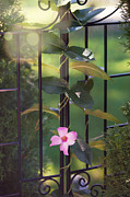 Floral Wall Art Posters - Through the Gate Poster by Kay Pickens