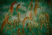 Bonnie Bruno - Through the Grass