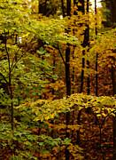 Linda Knorr Shafer - Through The Leaves