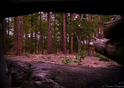 Prescott Photos - Through the Logs by Aaron Burrows