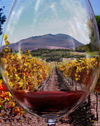 Wine Country. Mixed Media Framed Prints - Through the  Looking Glass Framed Print by Gail Salituri