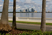 Bayshore Boulevard Posters - Through the Palm Trees Poster by Danielle Groenen